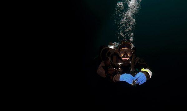 Decompression Procedures Diver, Koh Chang, Thailand