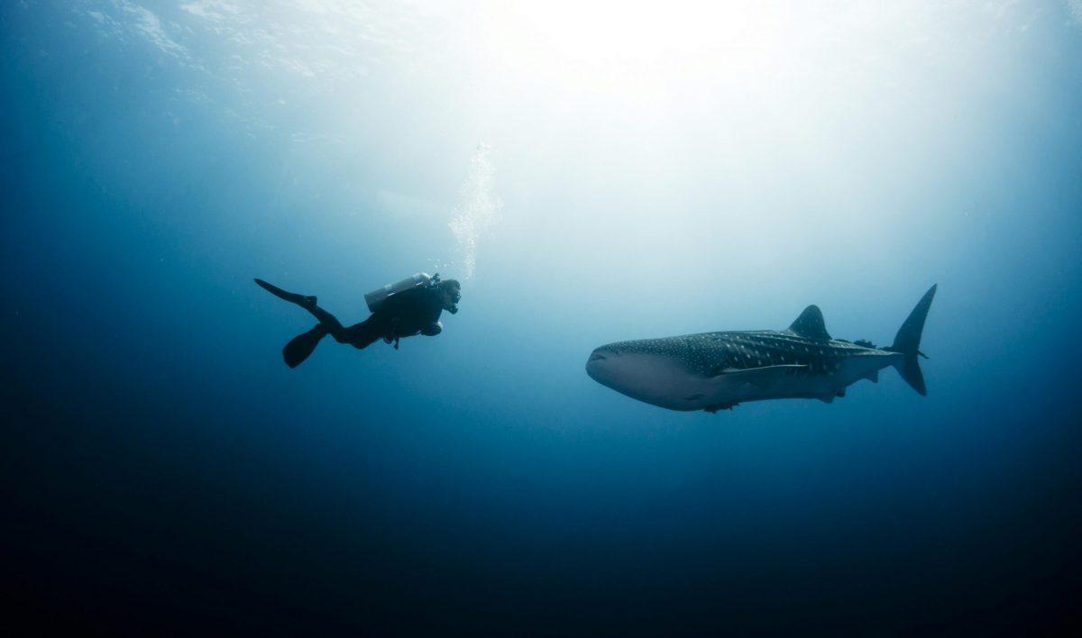 Deep Diver, Koh Chang, Thailand