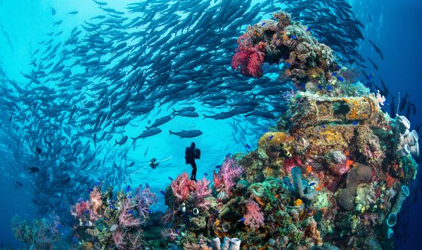 Deep, Wreck & Nitrox Diver, Koh Chang, Thailand